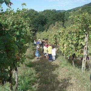 trasformazioni uva-vino primaria